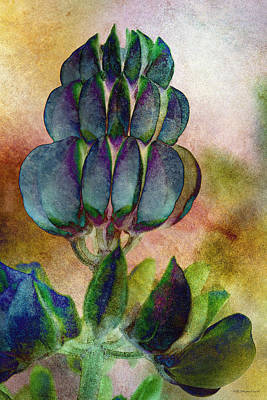 Photograph - Island Lupin by WB Johnston