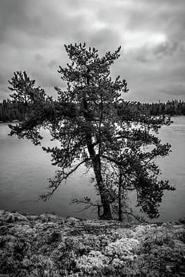 Photograph - Island Pine, Biscotasing Lake by Joshua Hakin