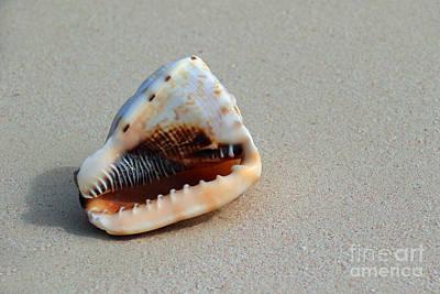 Photograph - Island Seashell I by Mary Haber