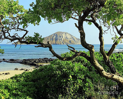 Hawaii Photograph - Island Through The Trees by Jennifer Robin