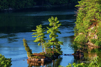 Photograph - Island With Two Pines And A Cedar Trees by Les Palenik