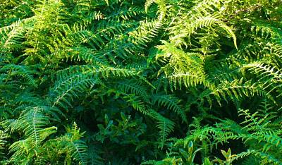 Photograph - Isle Au Haut Ferns by Polly Castor