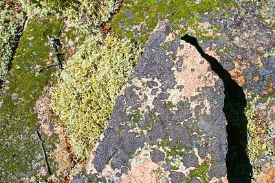 Photograph - Isle Au Haut Lichen by Polly Castor