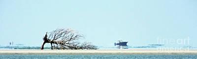 Photograph - Isle Of Palms Beached Remains by Lizi Beard-Ward