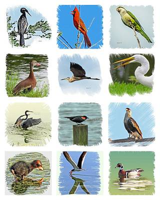 Photograph - Isles Birds Collage by T Guy Spencer