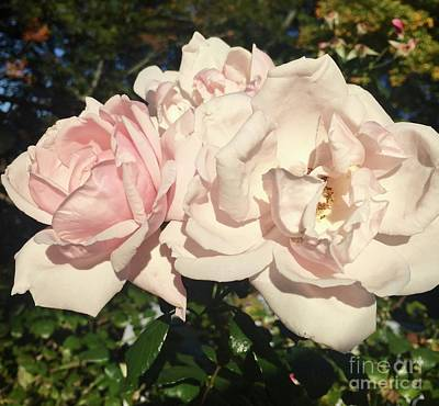 Photograph - Isn't She Lovely by Beth Saffer