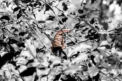 Photograph - Isolated Autumn Gold Leaf On Holly Leaves by Jacek Wojnarowski