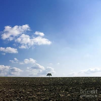 Isolated Tree Art Print by Bernard Jaubert