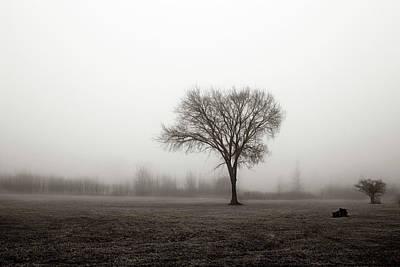 Photograph - Isolation by Denise Harrison