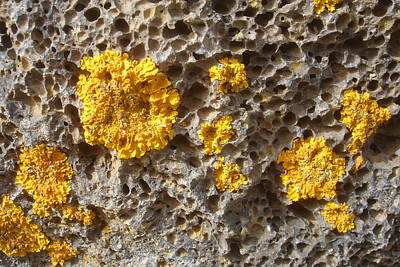 Photograph - Isolation - Lichen On Volcanic Stone by Robert Schaelike