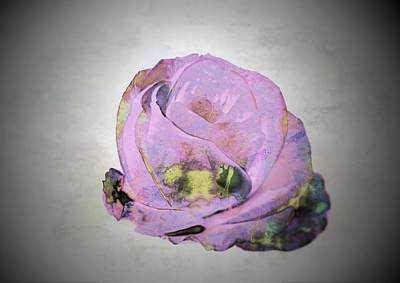 Photograph - Isolation Rose by Dorothy Berry-Lound
