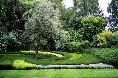 Photograph - Israel Garden Caen by Donna L Munro