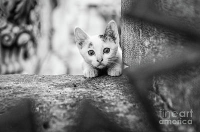 Of Cats Photograph - Istanbul Street Kitten by Dean Harte
