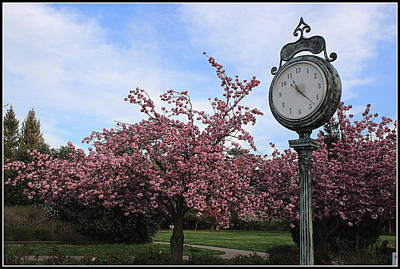Photograph - It Is Cherry Blossom Time by Dora Sofia Caputo Photographic Art and Design