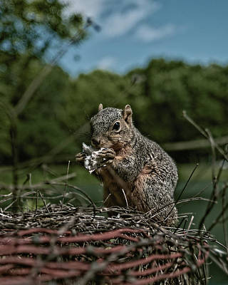 Photograph - It Is My Lunch Not Yours by Philip A Swiderski Jr