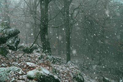 Photograph - It Is Snowy In The Woods by Jenny Rainbow