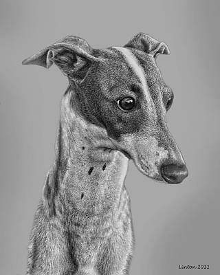 Italian Grayhound 2 Art Print by Larry Linton