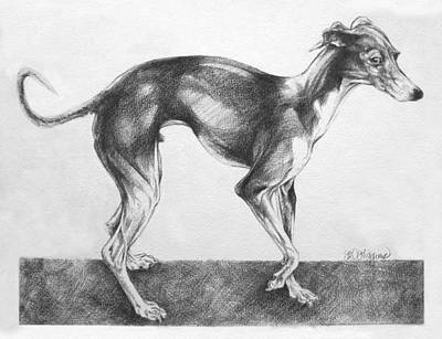 Italian Greyhound Art Print by Derrick Higgins
