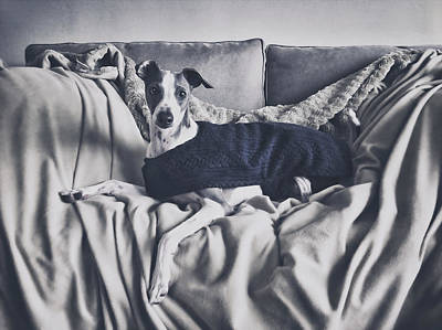 Italian Greyhound Photograph - Italian Greyhound Portrait 2 by Wolf Shadow  Photography