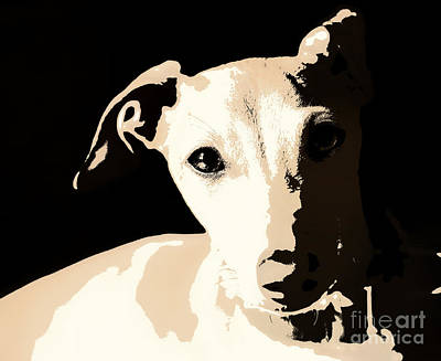 Rescued Greyhound Photograph - Italian Greyhound Poster by Angela Rath