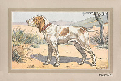 Target Threshold Nature - Italian pointer dog poster art wall, photo vintage dog poster, french dog pointer - Restored truck p by Art Makes Happy