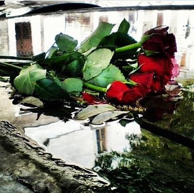 Photograph - Italian Roses by Cherylene Henderson