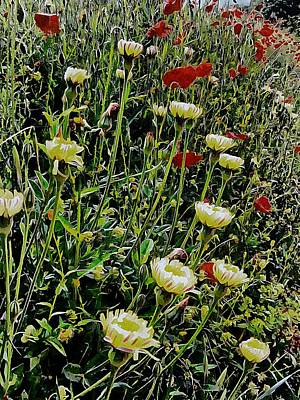 Photograph - Italian Wildflowers With Red Poppies by Dorothy Berry-Lound