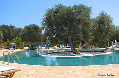 Photograph - Italy Resort- Olive Tree In Pool by Italian Art