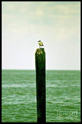 South Louisiana Photograph - It's A Big World by Scott Pellegrin