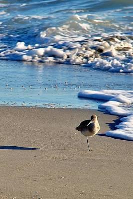 Photograph - It's A Bird Thing by John Hintz