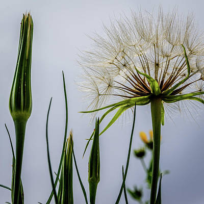 Photograph - It's A Dandy by Debra Martz