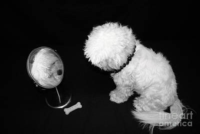 Maltese Photograph - Its A Dogs Life by Sally Bosenburg