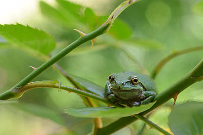 Photograph - It's A Froggy Frog World by Ronda Broatch