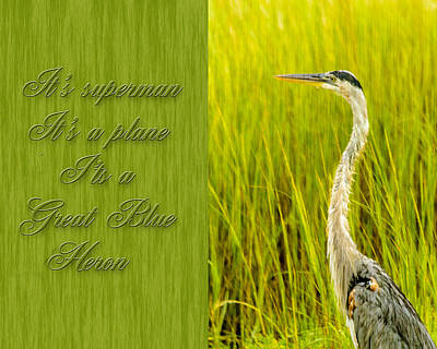 Photograph - It's  A  Great Blue Heron by Leticia Latocki