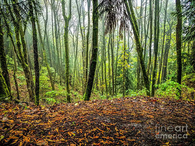 Photograph - It's A Jungle Out There by Jon Burch Photography