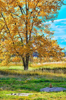 Photograph - It's A Prairie Dog Autumn by Robert Meyers-Lussier