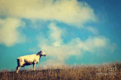Fluffy Clouds Mixed Media - It's A Sheep by Angela Doelling AD DESIGN Photo and PhotoArt
