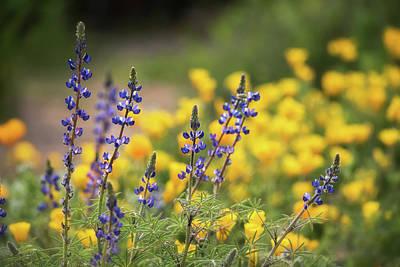 Photograph - It's A Spring Thing  by Saija Lehtonen