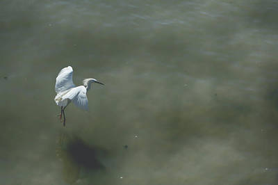 Egret Wall Art - Photograph - It's All In The Takeoff by Laurie Search