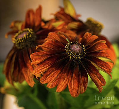 Photograph - It's Autumn by Cathy Donohoue