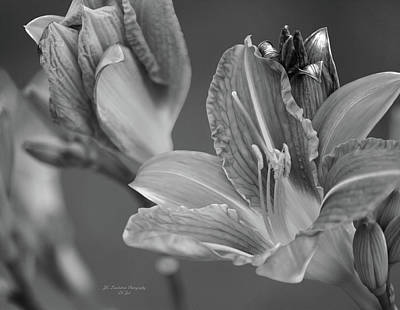 Photograph - It's Been A Day, Lily by Jeanette C Landstrom