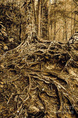 Tree Roots Photograph - It's Complicated by Michael Eingle