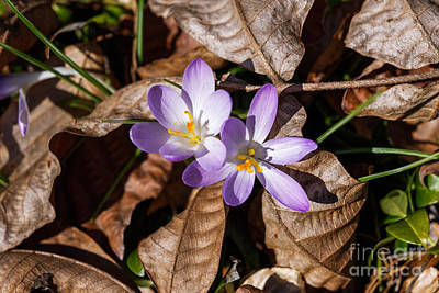 Photograph - It's Finally Spring by Paul Mashburn