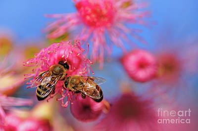 Australian Bees Photograph - Its My Turn Now... by Kaye Menner