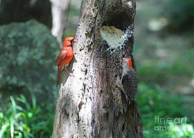 Cardinal Photograph - It's Nice To Share by Carol Groenen