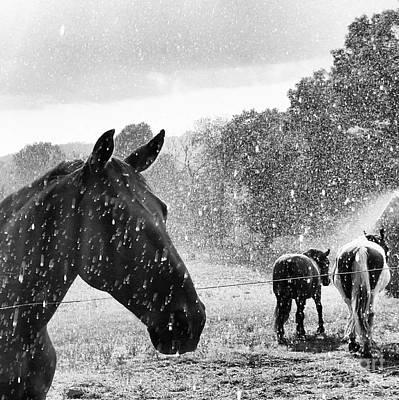 Photograph - It's Raining by Rabiah Seminole