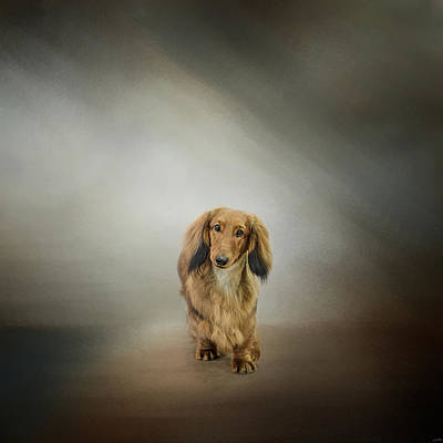 Dachshund Art Photograph - It's Showtime Baby - Dachshund by Jai Johnson