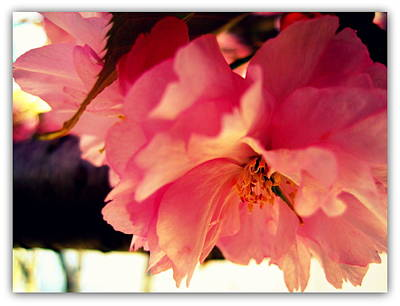 Photograph - It's So Pink by Jhoy E Meade