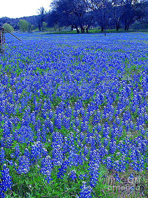 Photograph - It's Spring - Texas Bluebonnets Time by Merton Allen