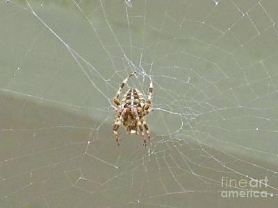 Bitsy Photograph - Itsy Bitsy Spider  by Crystal Loppie